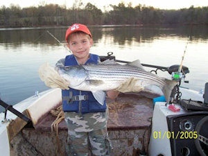 Striped Bass in Lake Hartwell